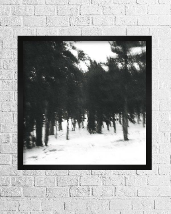 Trees blurry photo