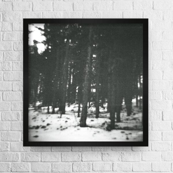 Blurry pine trees photo high quality