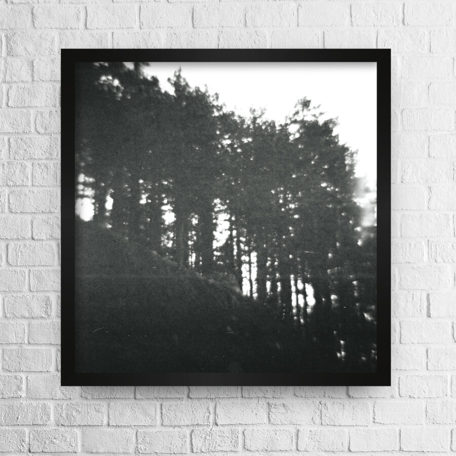 Blurry pine trees in line photo high quality